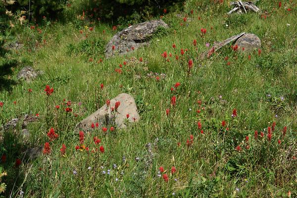 Dicksie's Gravelly Range 2007